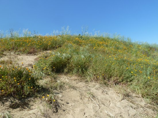 Chino Hills State Park: Field of Poppies on the Bane Ridge Trail