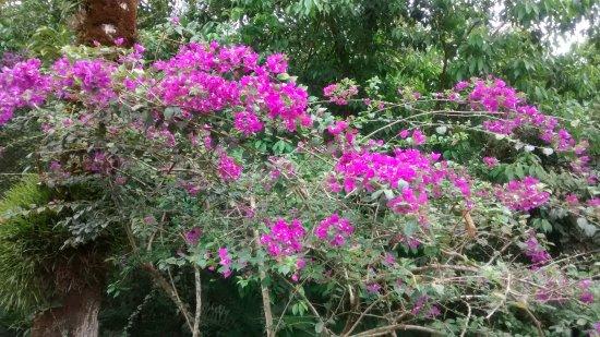 Chachagua, Κόστα Ρίκα: Beautiful plants everywhere
