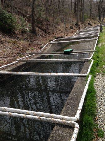 Montebello, Virginie : Trout are grown in this tank cascade.