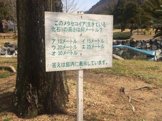 Kasaoka, Japan: メタセコイアの説明