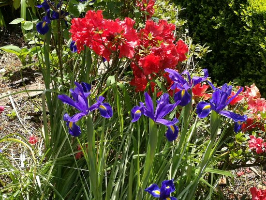 Awatuna, New Zealand: Garden in spring