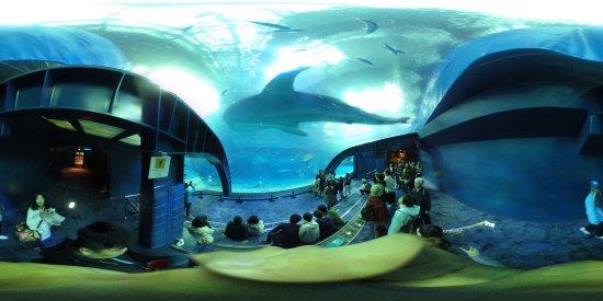 Okinawa Prefecture, Japonya: 水族館