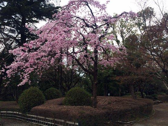Gifu Park: 岐阜公園