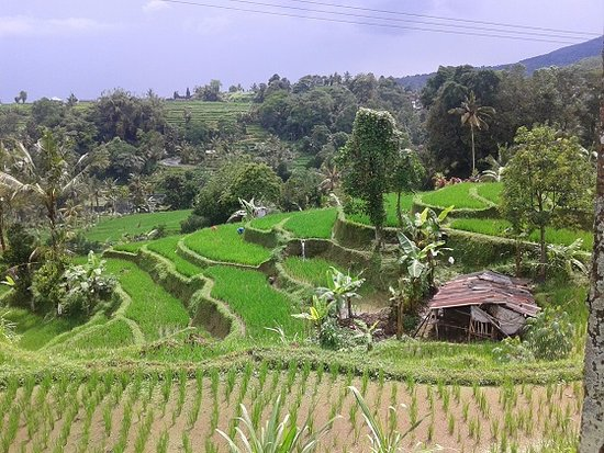 Bali Countryside Tour