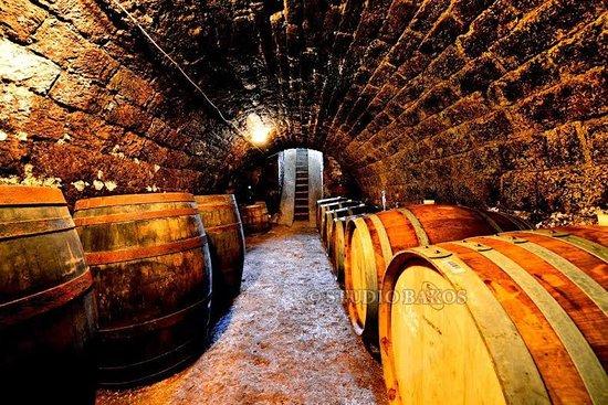 Arvay Family Winery
