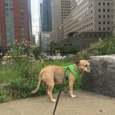 Irish Hunger Memorial: My dog is part Irish. She loved it.