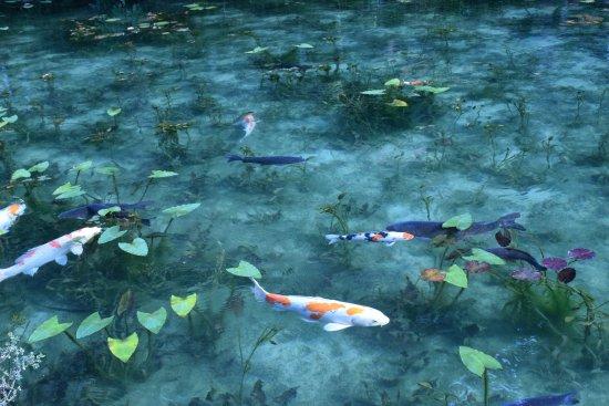 Seki, Japan: モネの池