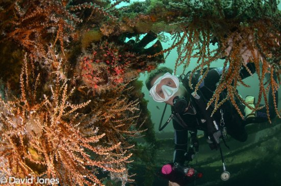 Action Divers: Instructor Andy showing me a huge Frogfish