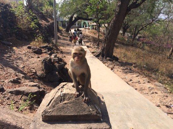 Монива, Мьянма: Una delle scimmiette