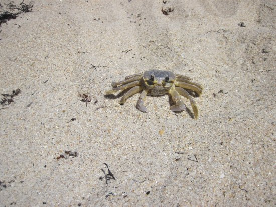 Round Island Beach Park : not sure what kind of crab this is but loved having his her picture taken