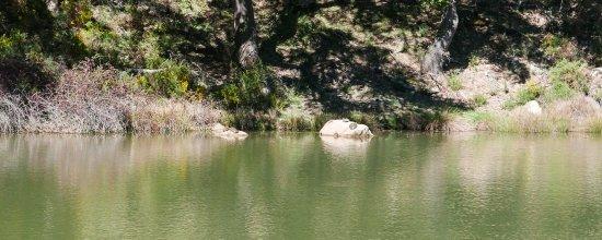 Sierra de Grazalema Natural Park, Espagne : Turtles Laguna Campobuche