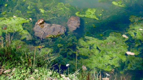 Sierra de Grazalema Natural Park, Espagne : Frog sunbathing Laguna Campobuche