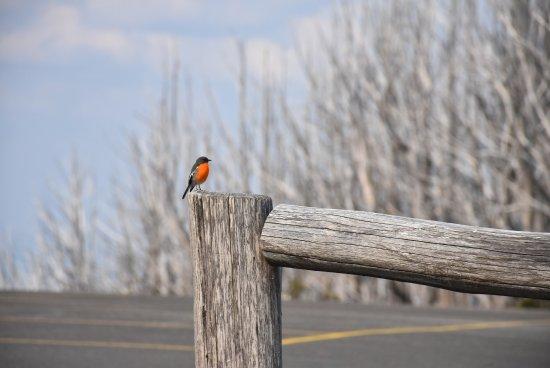 Yarra Ranges National Park: photo0.jpg