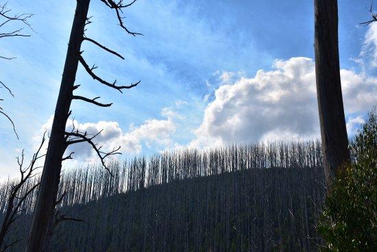 Yarra Ranges National Park: photo4.jpg