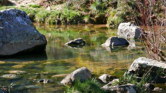 Sierra de Grazalema Natural Park, Espagne : Turtles sunning Laguna Campobuche