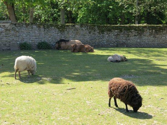 animaux dans leur p ture photo de parc pierre sainte genevi ve des bois tripadvisor. Black Bedroom Furniture Sets. Home Design Ideas