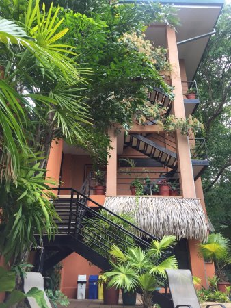 Jungle Vista Inn: Units A-D