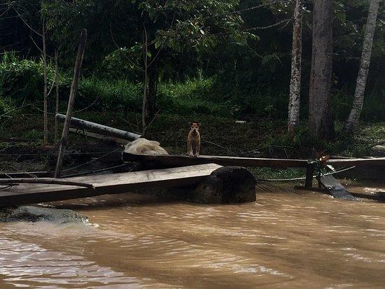 Sukau, Maleisië: photo1.jpg