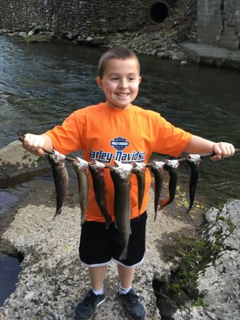 Rocky top outfitters pigeon forge tn top tips before for Fishing in pigeon forge tn