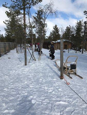 Enontekio, Finland: Hetta Huskies
