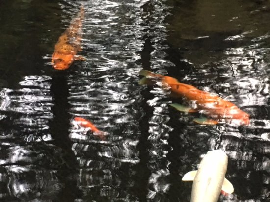 Heathman Lodge: fish in the pond