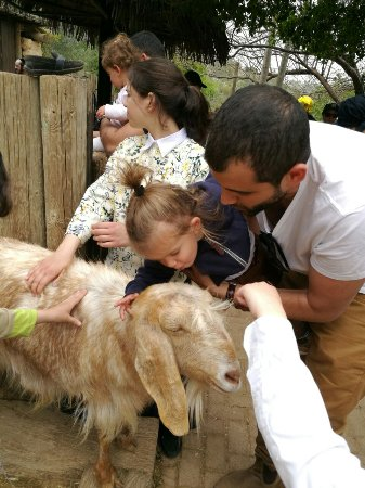 Tisch Family Zoological Gardens (Biblical Zoo)