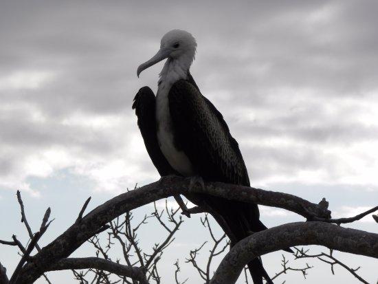 Baltra, Ecuador: North Seymour Island, Galapagos