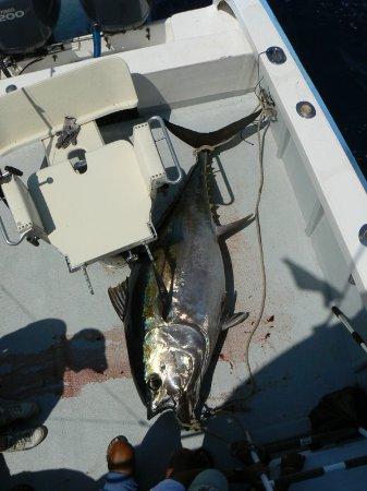 Big eye tuna San Cristobal Galapagos Islands with Ecuagringo