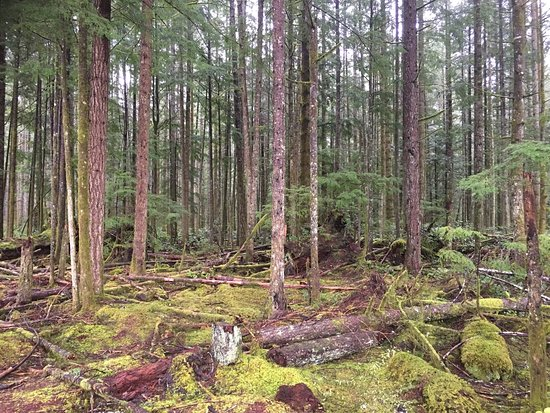 Campbell River, Canadá: Even on a damp morning the park provides a stunning visual experience