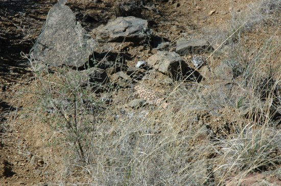 Fort Bowie National Historic Site: Look closely and see the gila monster!