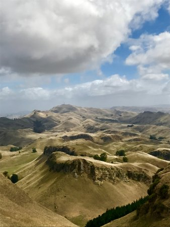 St Andrews Escape : Te Mata Drive views