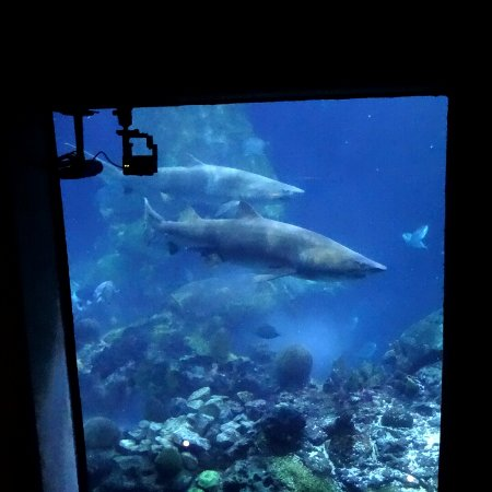Aqua 7 Picture Of Tennessee Aquarium