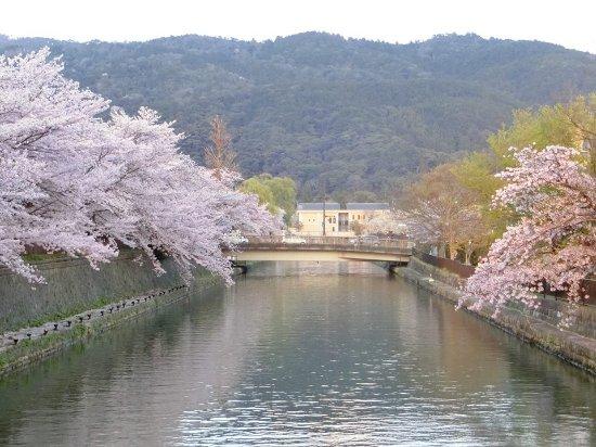 Lake Biwa Sosui-no Sakura