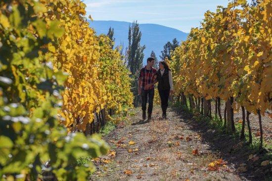 Summerland, كندا: Stroll through vineyards