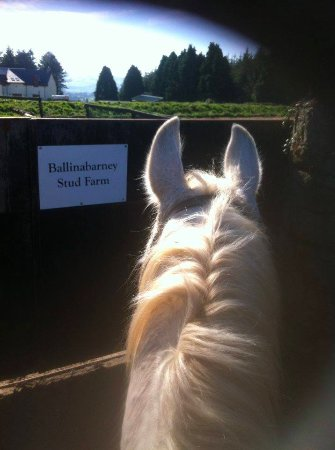 Wicklow EquiTours