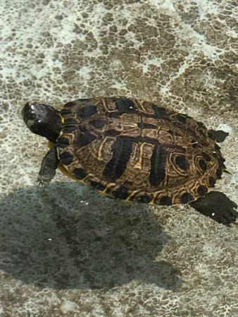 Georgia Sea Turtle Center: photo0.jpg