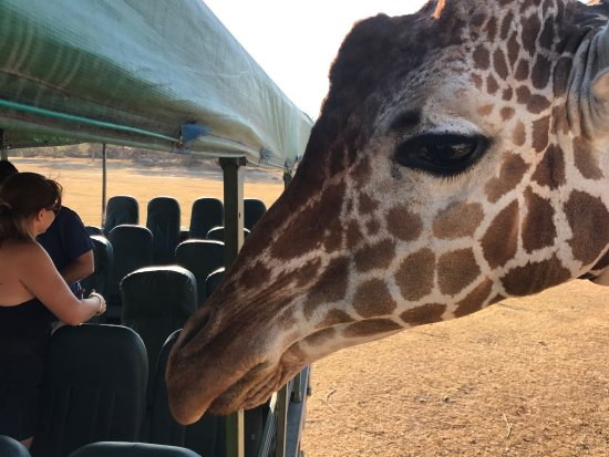 Africa Safari: photo2.jpg