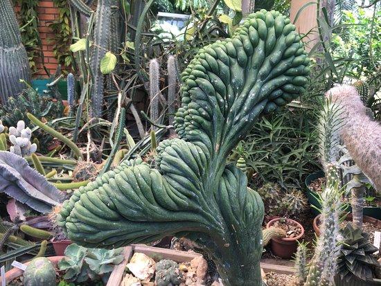 Jardin Exotico Kamala 사진