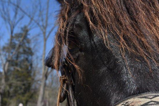 Hickory Hollow Horse Farm : photo0.jpg
