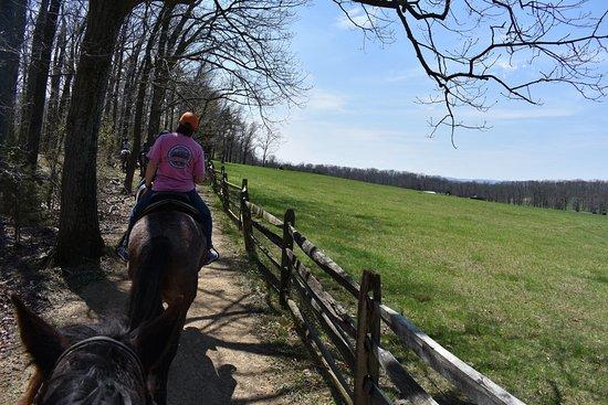 Hickory Hollow Horse Farm : photo1.jpg