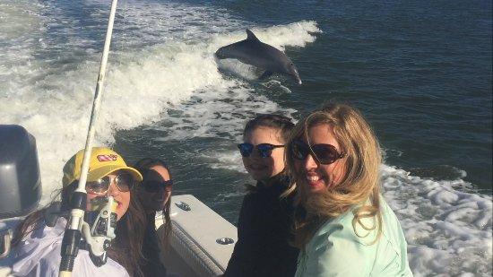 Goodland, FL: Surfing Dolphins
