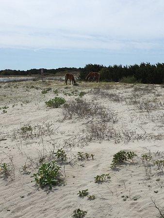 Beaufort, Carolina del Norte: photo3.jpg