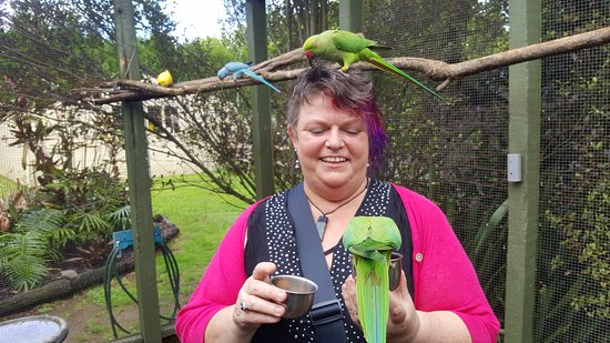 The Parrot Place: I was having my hair nibbled!