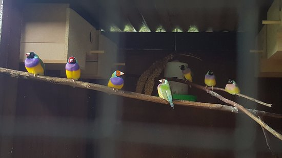 The Parrot Place: gorgeous wee birds