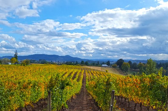 Northwest Wine Tours