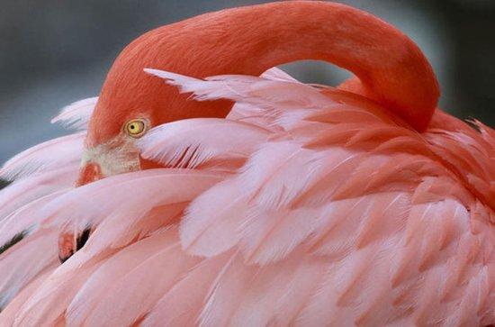 General Admission to Flamingo Gardens...