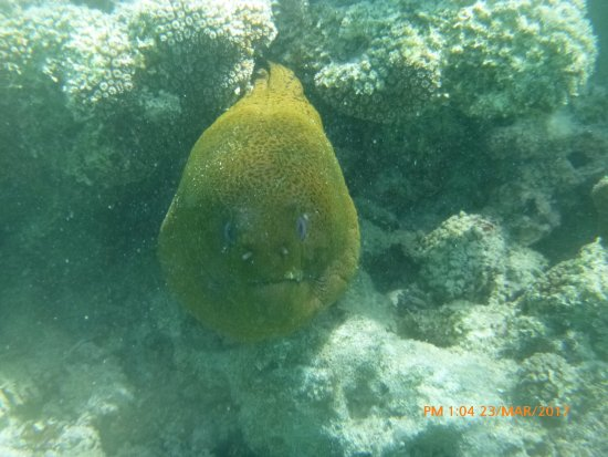 Muri, Cook Islands: Captain Tama's Lagoon Cruizes