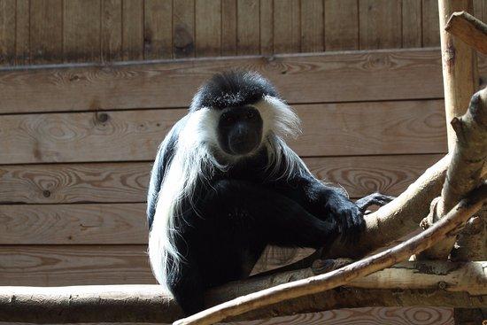 Zoo Plzeň: colobus