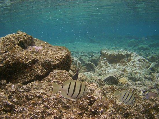 Pahoa, Havai: photo2.jpg