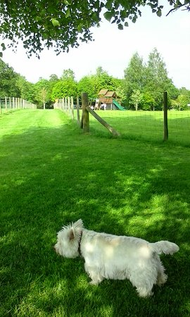 Pembridge, UK: Plenty of room for running around, ( Georgie thinks the sheep are his brothers and sisters)